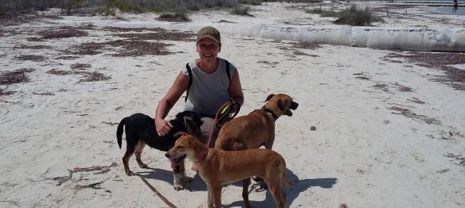 Koiranulkoilutuskeikka Meksikossa