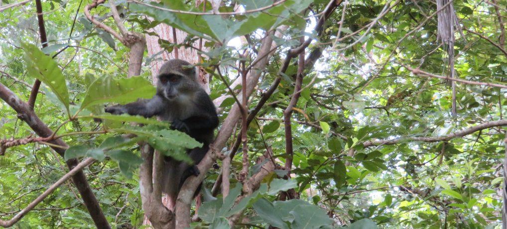 Sansibarin ihmeelliset eläimet