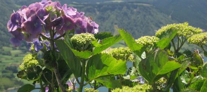 Kukkaisterapiaa Azoreilla